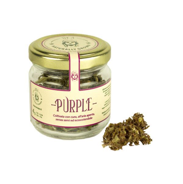 Canapa Legale Purple
